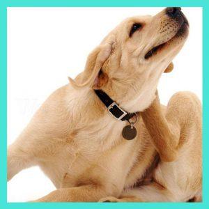 Tick & Flea Treatments For Dogs