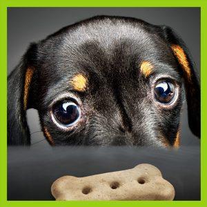 Dog Treats & Biscuits