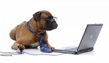 Dog-at-Computer-Book_Grooming